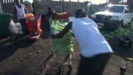 MS TS Shot of man pushing a shopping cart full of corn / Durban, South Africa