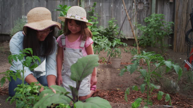 MS POV Shot of mother and daughter planting in organic garden / Santa Cruz, California, United States