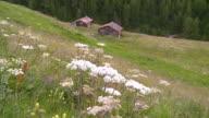 MS Shot of mountain village Findeln / Zermatt, Valais, Switzerland