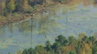 MS AERIAL Shot of mucky swamp in northwest Alabama / Alabama, United States