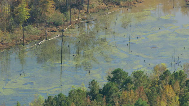 MS AERIAL Shot of mucky swamp in northwest Alabama / Alabama, United States