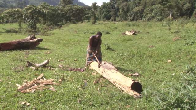 MS Shot of natice batwa woman swinging axe at large log / kigez, kabale, uganda