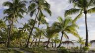 WS Shot of Palm trees and people roaming near at sandy beach / Ngapali, Rakhine State, Myanmar