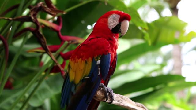 CU TD Shot of parrot / Ubud, Bali, Indonesia
