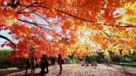 MS TU Shot of people and autumnal fallen leaves under the waving autumnal color trees by winds at western sun / New York, United States