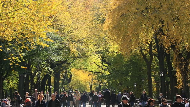 MS PAN TU Shot of people walking down mall surrounded by autumn color trees and autumnal leaves / New York, United States