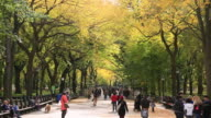 WS Shot of people walking down mall surrounded by autumn color trees and autumnal leaves / New York, United States