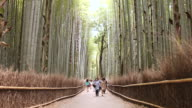 MS Shot of people walking on path through bamboo forest / Kyoto, Kanto, Japan