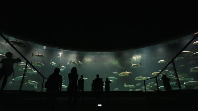 WS Shot of people watching fishes in aquarium / Kasai, Tokyo, Japan