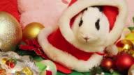 CU Shot of Rabbit dressed up like Santa Claus / Seoul, South Korea