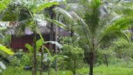 MS Shot of Rain in tropical garden / Island Ko Lanta, Krabi Province, Thailand