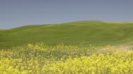 WS Shot of Rape field and green Hills / Pienza, Tuscany, Italy