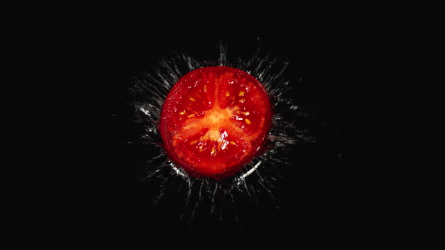 CU SLO MO Shot of Red Tomatoes, solanum lycopersicum, Fruits falling on Water against Black Background / Calvados, Normandy, France