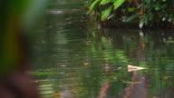 Shot of rippling water in Botanical garden in Brazil.