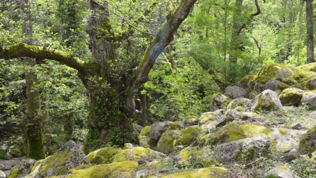 MS Shot of Rocks in Deciduous forest / Col de Bavella, Corsica, France