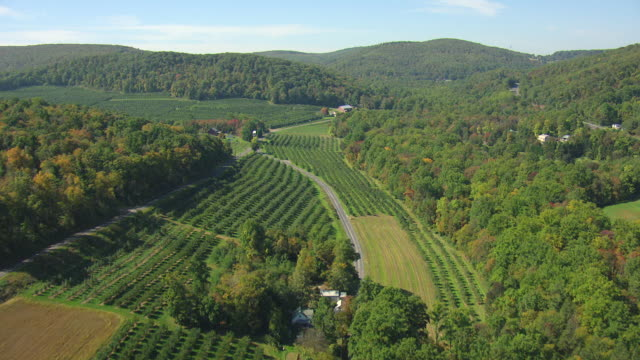 WS AERIAL Shot of rural country with orchards in Franklin County / Pennsylvania, United States