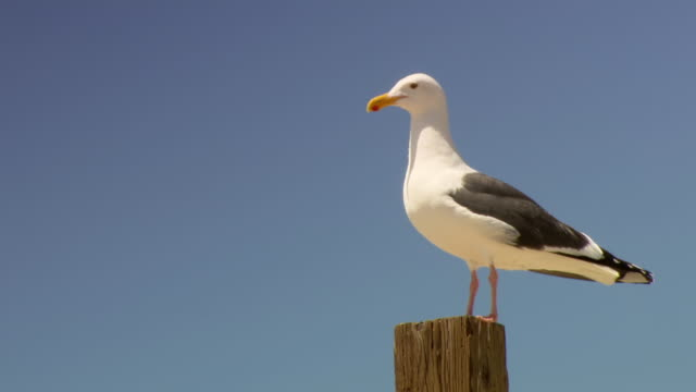 Image result for sea bird