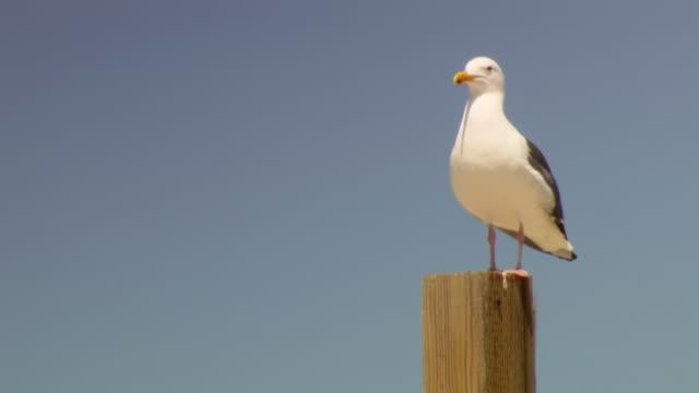 CU Shot of Seabird / Los Angeles, California, United States