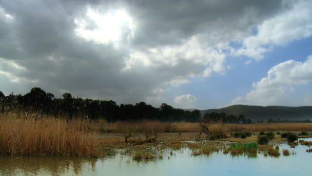 WS T/L Shot of sky moving over reed bed landscape in winter at Hula Nature reserve / Hula valley, Upper Galilee, Israel