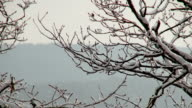 MS Shot of snow-capped branches in winter / Erbeskopf, Hunsruck, Rhineland Palatinate, Germany
