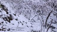 Shot of snowy trail at Deoksungsan mountain