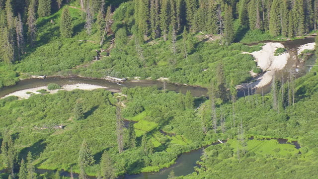WS AERIAL Shot of South Bitch Creek and dense forest / Wyoming, United States