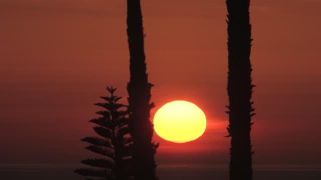 MS T/L Shot of Spectacular Sun Rise through palms tree over ocean / Malibu, California, United States