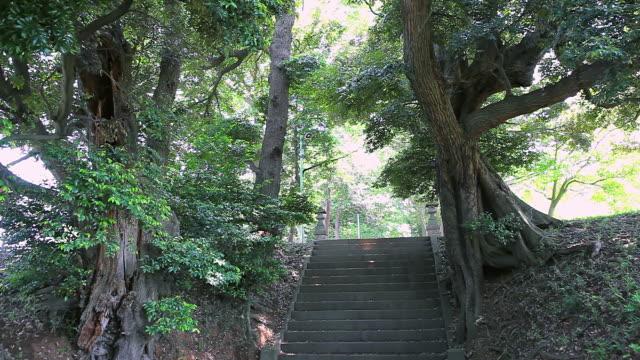 MS Shot of stairs beside trees in shrine / Ichihara, Chiba, Japan
