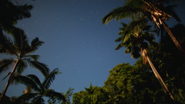 MS T/L Shot of star and cloud filled sky moving from day to night behind palm trees / Waipio, Hawaii, United States