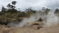 MS Shot of steam rising from steam vents and blowing in  wind over ferns, bushes and trees with dry soil at Volcanoes National Park / Volcano, Hawall, Big Island, United States