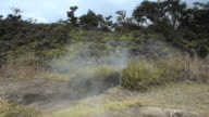 MS Shot of steam rising from steam vents and blowing over ferns and trees at Volcanoes National Park / Volcano, Hawall, Big Island, United States