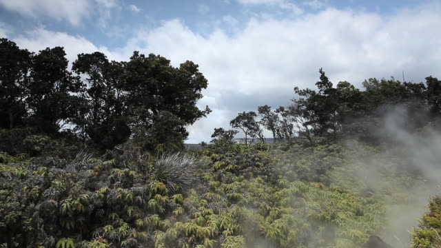 MS Shot of steam rising from steam vents blowing over ferns, trees and bushes with Kilauea Caldera in distance at Volcanoes National Park / Volcano, Hawall, Big Island, United States