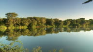 MS PAN Shot of Still water with trees / Limpopo, South Africa