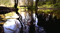MS SLO MO PAN Shot of Stream reflecting forest and footbridge / Vernonia, Oregon, United States