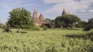 MS Shot of Stupas of ancient temples in flowering field / Bagan, Mandalay Division, Myanmar