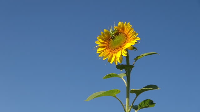 CU Shot of summer flowers / Trier, Rhineland Palatinate, Germany