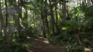 MS PAN Shot of Sun rays on palm trees leaves / Waipio, Hawaii, United States