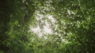 'CU POV LA Shot of Sunlight through trees, green leaves / Bristol, United Kingdom'
