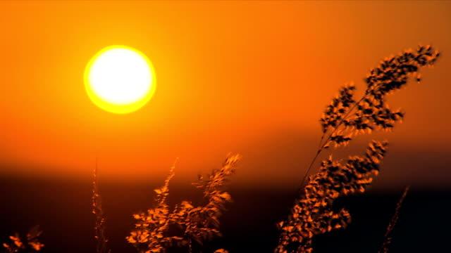Shot of the sun through wheat/ Etosha National Park/ South Africa
