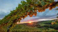 T/L 8K shot of the vineyard at sunset