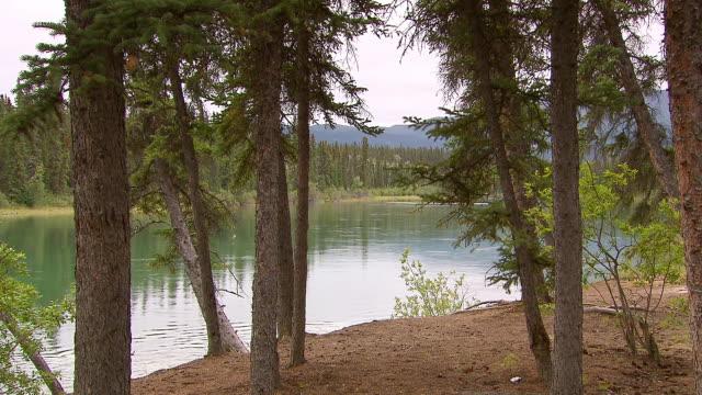 MS Shot of Through trees of Takhini River / Yukon, Canada