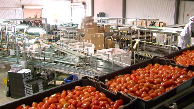 MS Shot of Tomato production line / Two Wells, South Australia, Australia