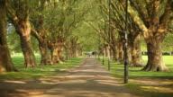 MS Shot of tree lined avenue on Jesus Green park / Cambridge, Cambridgeshire, United Kingdom