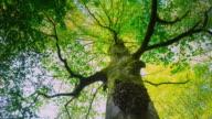 CU T/L LA Shot of tree trunk in forest / Saja Besaya, Cantabria, Spain
