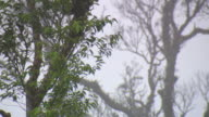 MS LA Shot of Trees swaying in wind with foggy area / Mae Sai, Chiang Rai, Thailand