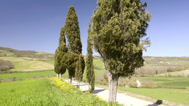 MS PAN Shot of Tuscany landscape with Cypress tree avenue / Pienza, Tuscany, Italy