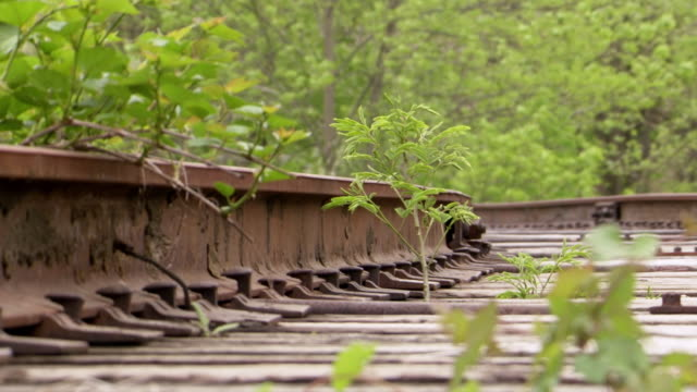 CU ZI Shot of vegetation growing through abandoned train tracks / Greensboro, North Carolina, United States
