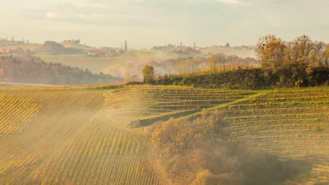 T/L 8K shot of vineyards in the fog