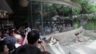 MS Shot of Visitors watching panda in zoo / Beijing, China