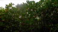 POV shot of walking in mangrove.
